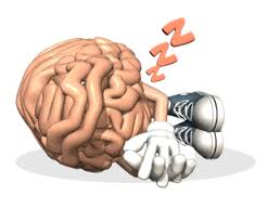 Afbeeldingsresultaat voor hersenen en dromen